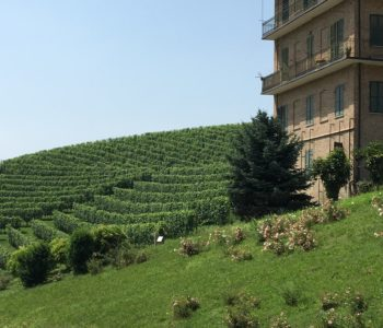 Across the vineyards at Fontanafredda with a glimpse of a Battenburg building